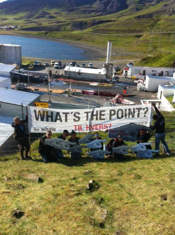 Protesters ask 'What's the Point?' of fin whaling.