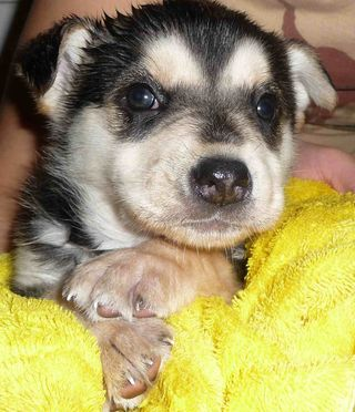 A puppy in the First Nations community