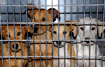 A new report by the International Fund for Animal Welfare (IFAW), reveals that the Internet can be a tool for exploiting dogs.