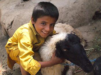 Die Ravi Foundation, eine Partnerorganisation des IFAW in Pakistan, bekam einen Rettungsfonds für die Behandlung und Fütterung der Tiere bereitgestellt, die kürzlich Opfer der Fluten im südlichen Punjab geworden waren.