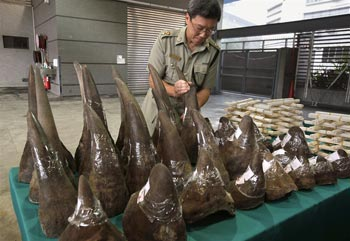 Hong Kong Customs seized on Tuesday a total of 33 rhino horns, 758 ivory chopsticks and 127 ivory bracelets, worth about HK$17.4 million ($2.23 million), inside a container shipped from Cape Town, South Africa, according the a customs press release. Bobby Yip / Reuters