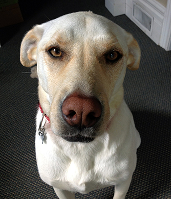 Ripley is a healthy three year old cross who is looking for her very own committed forever home.