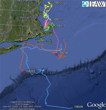 The paths of six dolphins tracked using special satellite tags attached to dolphins released by the IFAW MMRR team.