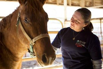 The author with one of the horses from the Arkansas abuse case. c. IFAW/J.C. Bouvier