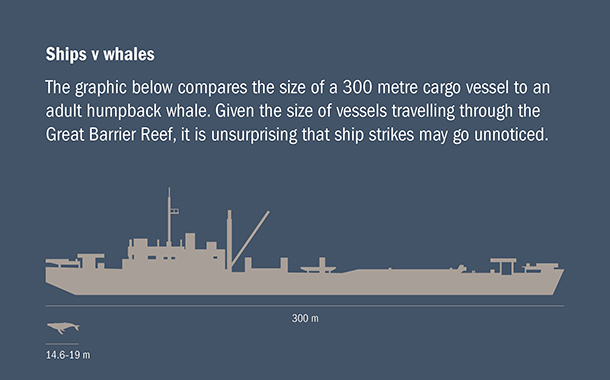 Next to a 300-metre long cargo ship, even a humpback whale can go undetected ©IFAW