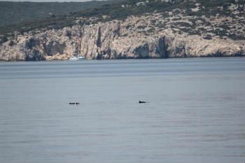 Perfekte Bedingungen für Schweinswal-Sichtungen