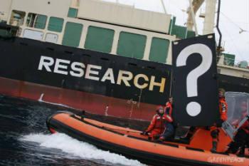 Die Genauigkeit, mit der Australien vor Gericht dargelegt hat, dass Japans Walfang ausschließlich kommerziellen Interessen dient und weder modernen wissenschaftlichen Standards genügt noch irgendeine Erkenntnis bringt, hat dafür gesorgt, dass nun auch die letzte Lüge um Japans Walfang entlarvt wurde. Foto: Greenpeace International