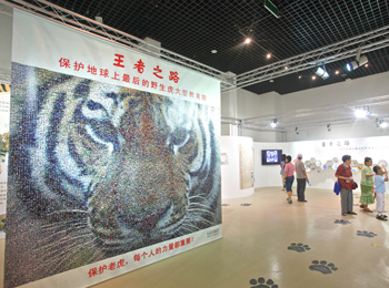 "A multimedia exhibition ""Plight of the Jungle King - Protect the Last Wild Tigers"", organized by IFAW, opened at the National Zoological Museum of China. One of the many events the IFAW Beijing team executes over the course of their year."