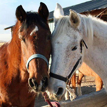 IFAW needs to raise $10,000 to purchase and distribute hay with the Colorado Horsecare Foodbank immediately. c. Colorado Horsecare Foodbank