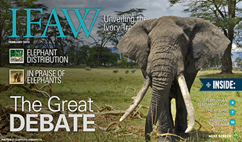 "To interact with ""Unveiling the Ivory Trade"", click here."