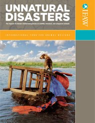 In the 2009 report, Unnatural Disasters, IFAW outlines the severe consequences that climate-change related natural disasters are having on the world's wildlife, livestock, and companion animals.
