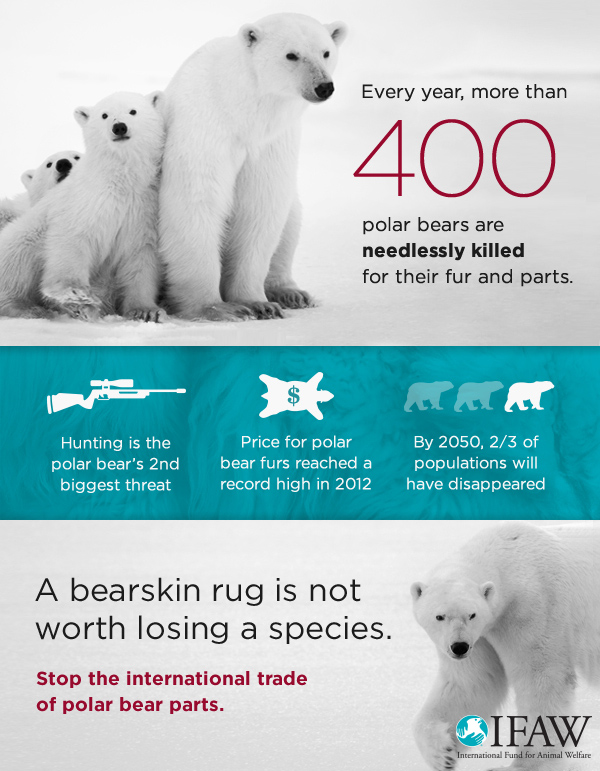 According to our best estimates, more than 400 polar bears are indiscriminately killed each year for their fur and parts. And every polar bear removed from the population is one less animal able to reproduce and help build the next generation.