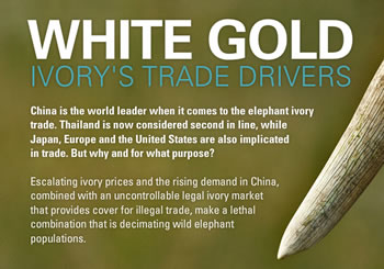 Our new iPad app helps answer the question: what drives trade in elephant ivory?