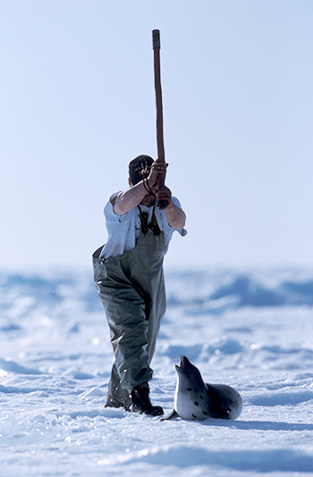 Canadian East Coast seal hunt - and now the Inuit seal hunt - are being depicted as the cruelest on the planet.