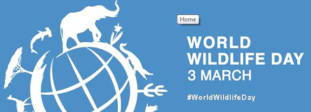 Tweet deze post voor #WorldWildlifeDay -!