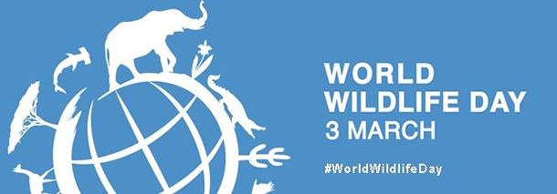 Be sure to tweet your support of #WorldWildlifeDay!