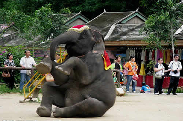 An elephant is made to perform in another zoo.