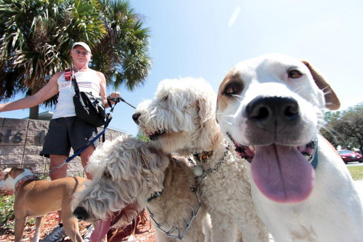 Gainesville, FL: Food Truck Rally Now Offers Options for Pets to Dine Alongside Owners