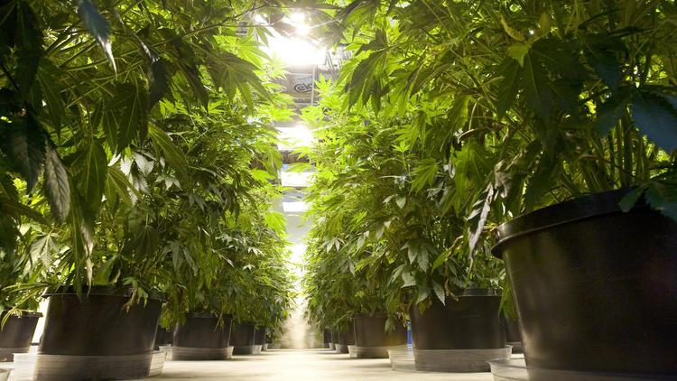 Seattle, WA: Marijuana Food Truck Set to Roll into Washington State this Weekend