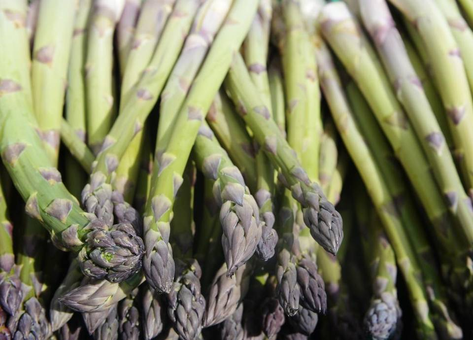 Pasco, WA:  Asparagus celebration coming to close at Food Truck Friday