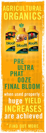 final bloom ooze bloom phat bloom