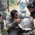 Galapagos_giant_tortoises_tagging_