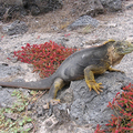 Galapagos_sand_web