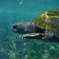 Galapagos_underwater_pantxorama_flickr_web