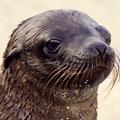 Seal_face_jta_web