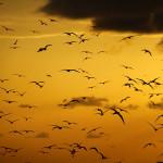 Aves marinhas