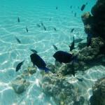 Vida marinha
