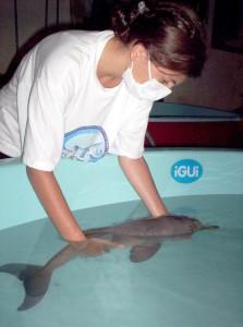 Auxiliando a natação do golfinho