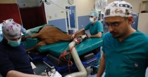 Cirurgia em cavalo de corrida