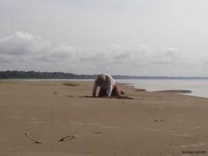 Comunitário cavando um ninho de tartaruga e ovos transferidos para uma região mais alta da praia devido a possibilidade de inundação.
