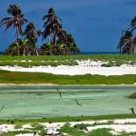 Aspecto da Ilha do Farol com coqueiros introduzidos ao fundo