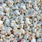 Aspecto da areia biogênica do Atol das Rocas
