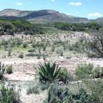 ambientes áridos - Vegetação árida
