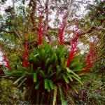 Flora da mata Atlantica