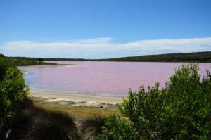 Lagos cor-de-rosa - Lago Hiller
