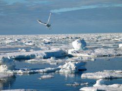 Ave caçando no gelo