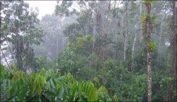 precipitação - ciclo da água