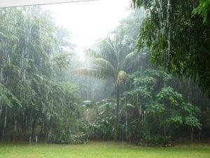 cheiro da chuva