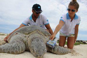 Tartaruga atol das rocas