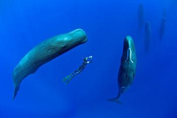 Ecolocalização da Baleia Cachalote
