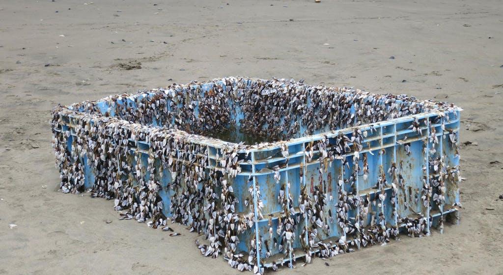 Detritos plásticos com animais presos