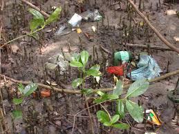 foto do lixo que vai parar nos mangues