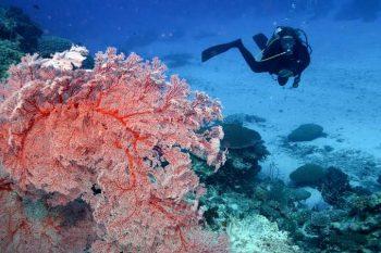 corais