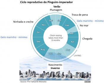 Cilco de Vida do Pinguim Inpeador