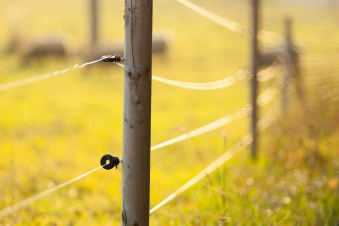 Fencing Worker Contacts Line - Spanish