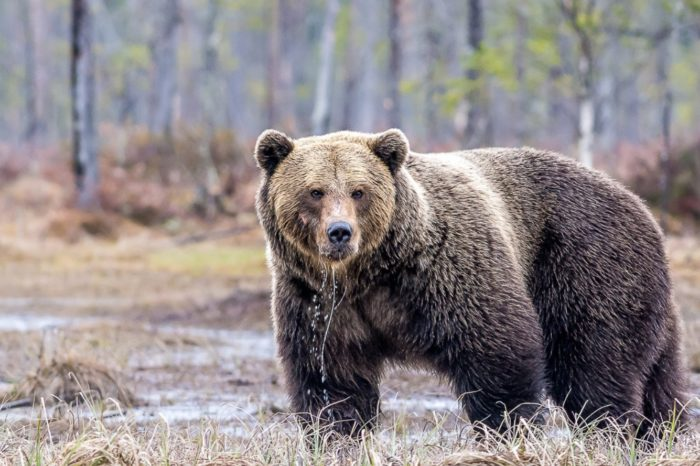 Staying Safe in Bear Country Video